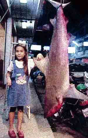 fishing in pattaya sharks - did she catch this?
