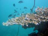 beautiful reef and fish